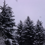 Зимняя уборка в Дендрарии 001.jpg