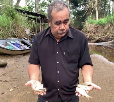 Ikan, udang mati bertimbulan di sungai Kota Marudu, penduduk dalam kebimbangan