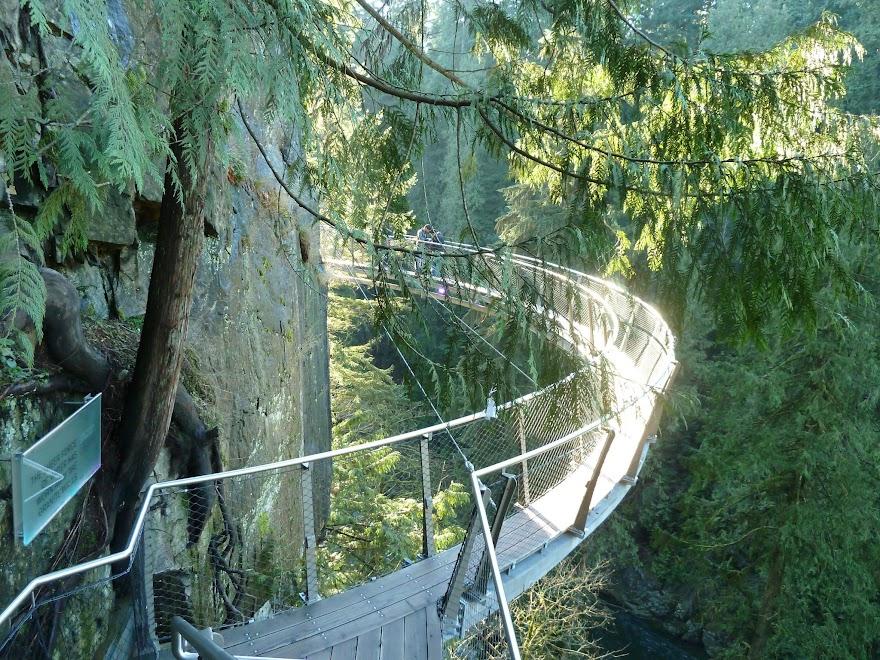 Capilano cliff walk Vancouver