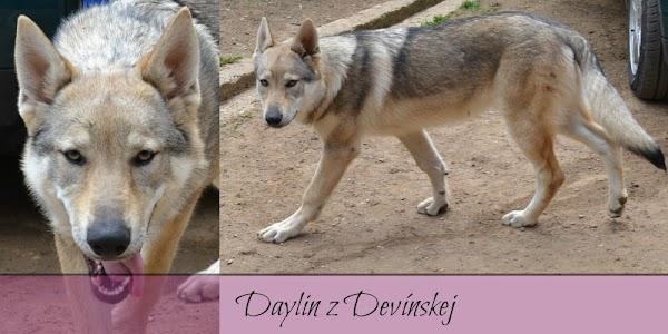 Daylin z Devínskej 1.jpg