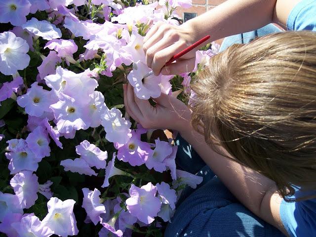 cultivo de plantas florales anuales - 100_0199.JPG