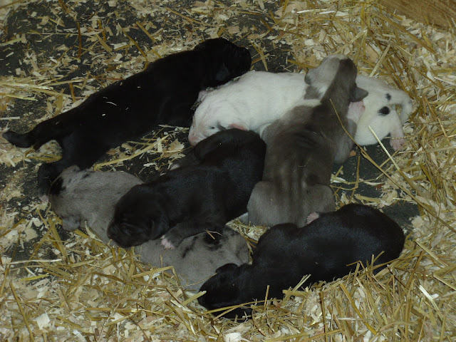 Serena's litter @ 1 week