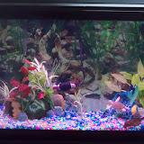 Fish - 100_6532.JPG