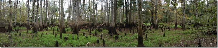 Dry Swamp - pano