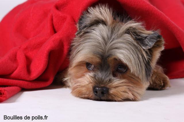 Bouilles de Poils - photos Studio - 2010-12-02%2Bbacchus%2B116.JPG