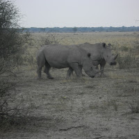 Rhinos at the Khama Rhino Sanctuary