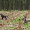 2012-12-16 11-19 Gdzieś po drodze, taka Afryka.JPG
