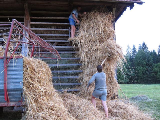 Kmetijstvo-agriculture - IMG_0427.jpg