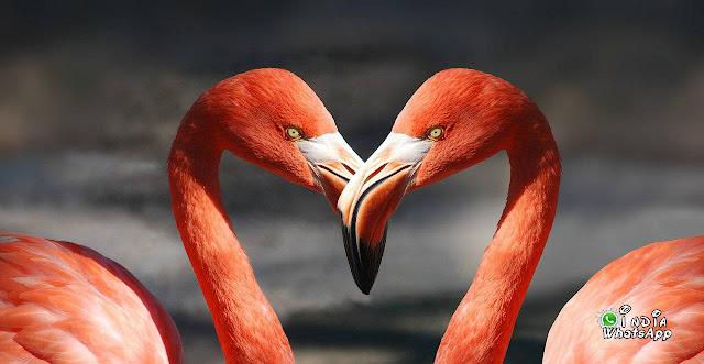 Hansh-kissing-couple