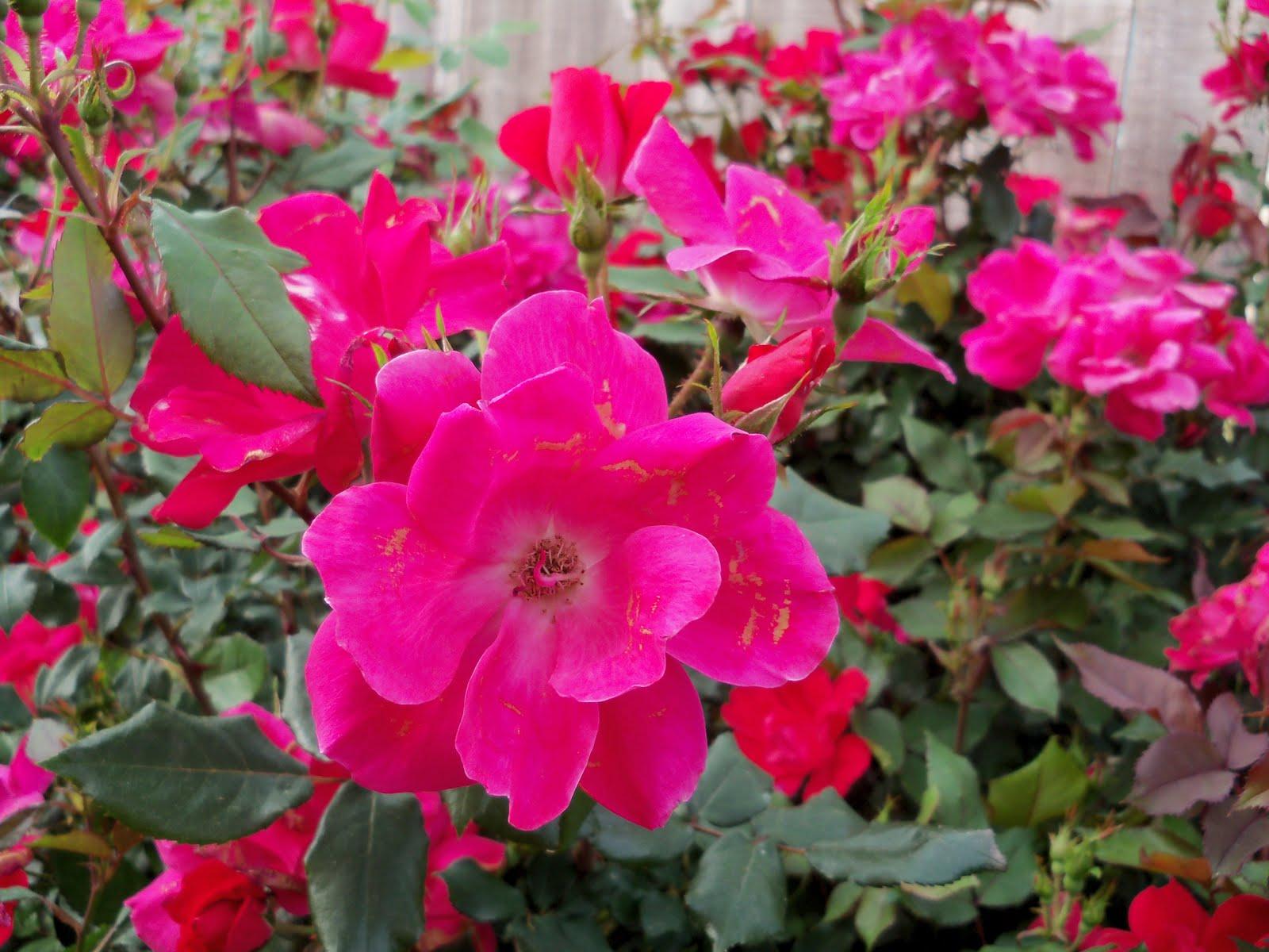 Gardening 2010 - 101_0876.JPG
