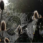 Herfst2014-5.jpg