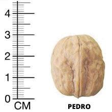 Педро грецкий орех