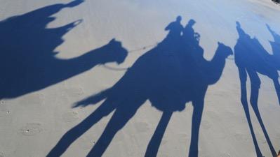 Us Camel Shadow