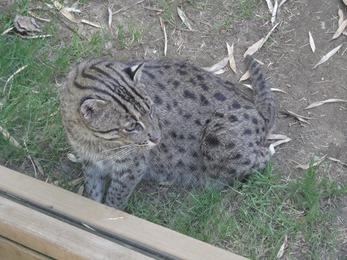 2017.06.17-051 chat pêcheur