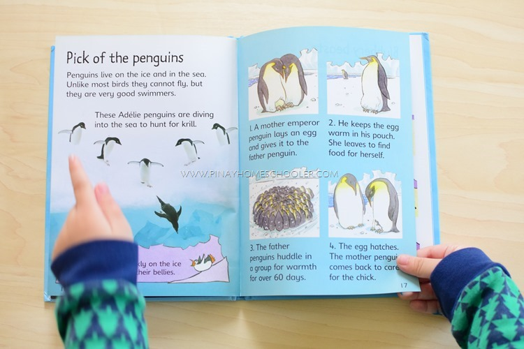 Books about Penguins for Preschoolers