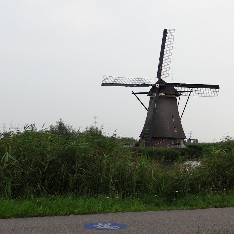 Day_6_Kinderdijk_16.JPG