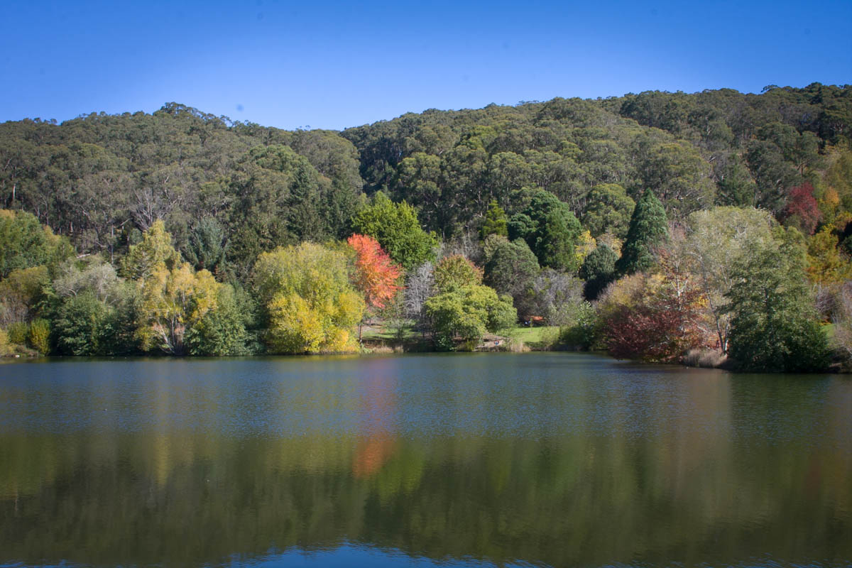 2011 04 25 Mt Lofty Botanic Garden - IMG_6534.jpg