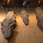 mumie krokodyli w Kom Ombo.jpg