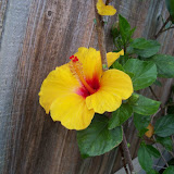 Gardening 2013 - 115_5652.JPG