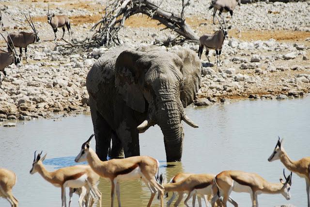 أفضل ما في أفريقيا  Best of Africa Namibia_180807114748