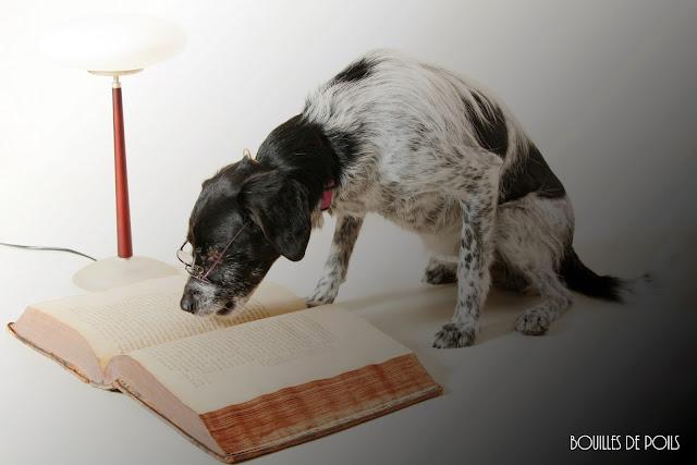 Bouilles de Poils - photos Studio - pampalit-nuit3.jpg