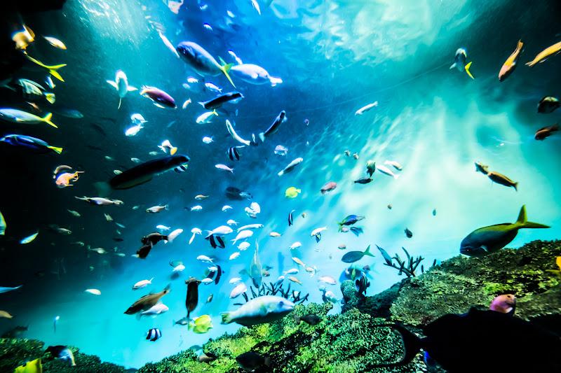 Miyajima Public Aquarium4