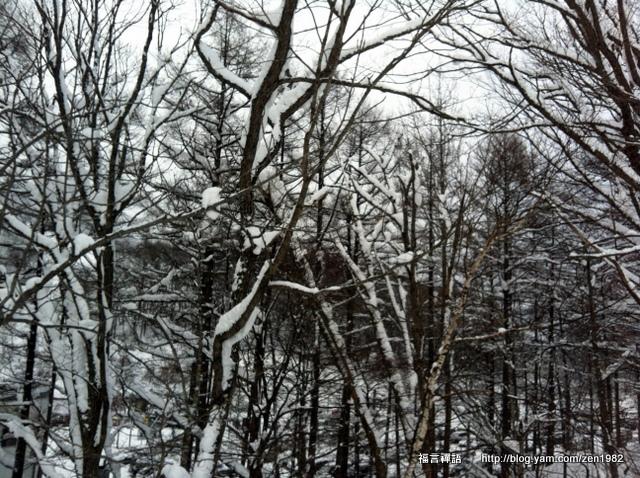 旁間的樹,也都快結成樹冰了!