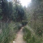 winding through some pine trees (77200)