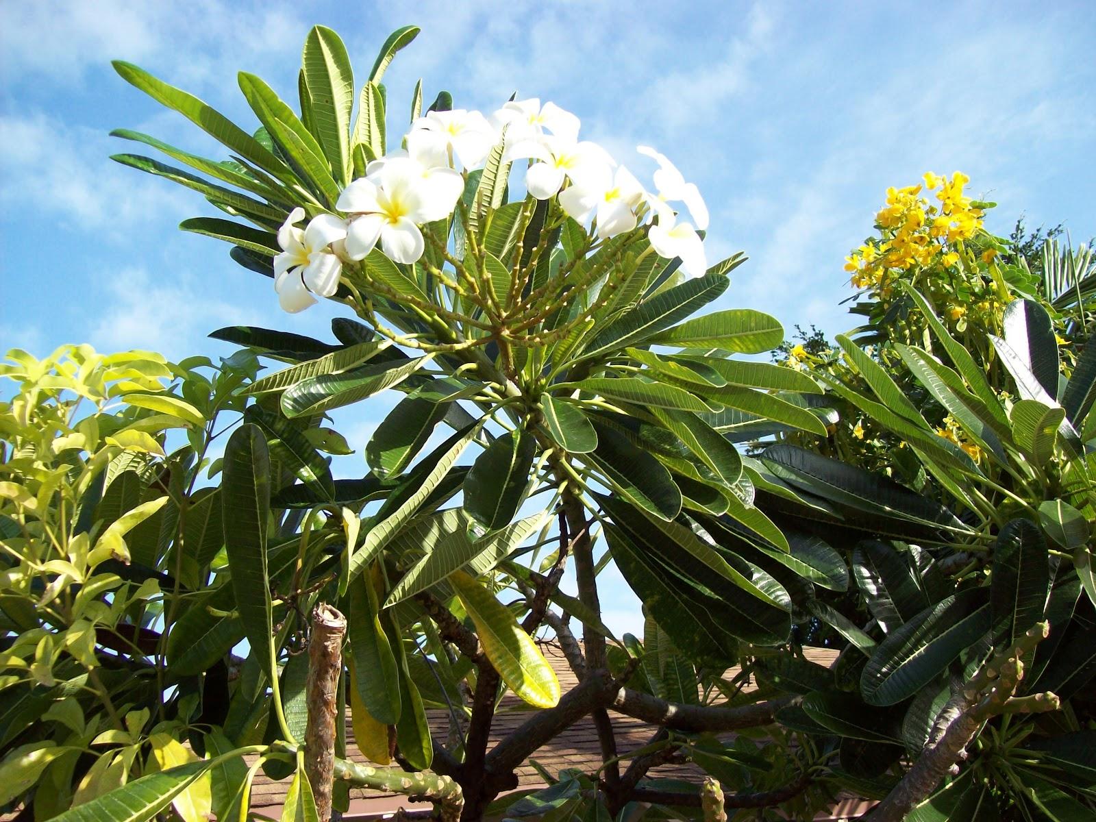 Hawaii Day 2 - 100_6507.JPG