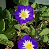 Gardening 2011 - 100_9286.JPG