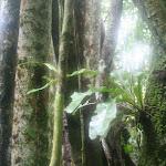 southamerica-2-174.jpg