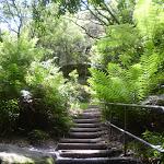 Stairs on Round Walk track (9623)