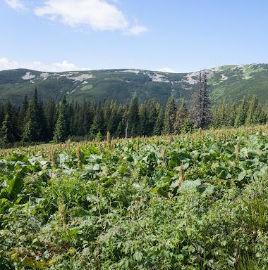 20170630_Carpathians_217.jpg