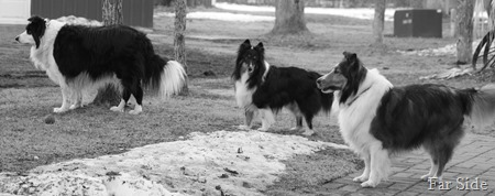 Three  dogs all lined up March 10