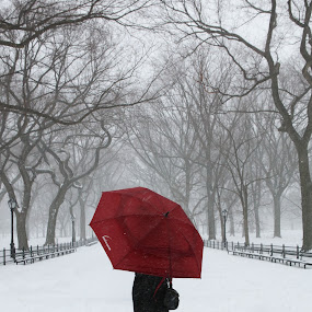 Poets Walk by VAM Photography - City,  Street & Park  City Parks ( winter, park, snow, nyc, blizzard,  )