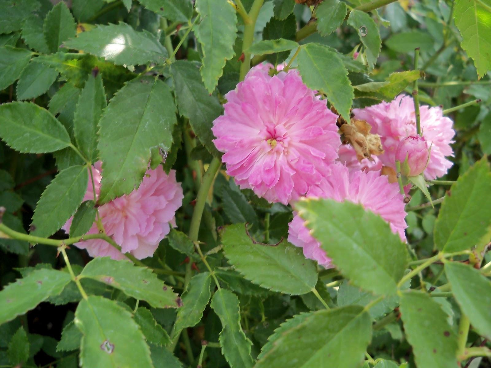 Gardening 2011 - 100_0099.JPG