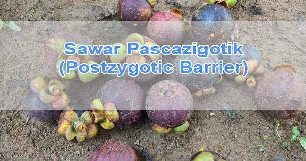 Sawar Pascazigotik (Postzygotic Barrier)