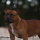 Shes The One of Red Passion (Trijntje) - IMG_3526.JPG