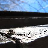 Critters - Wallkill%2B067.jpg