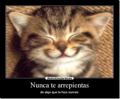 humor gatos (5)