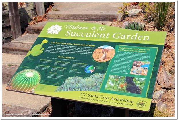 160813_UCSC_Arboretum_214