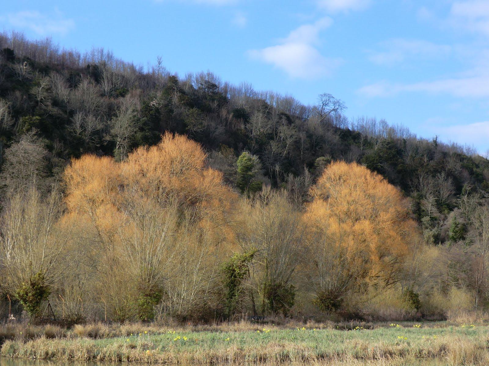 CIMG7465 Tree colour, Offham