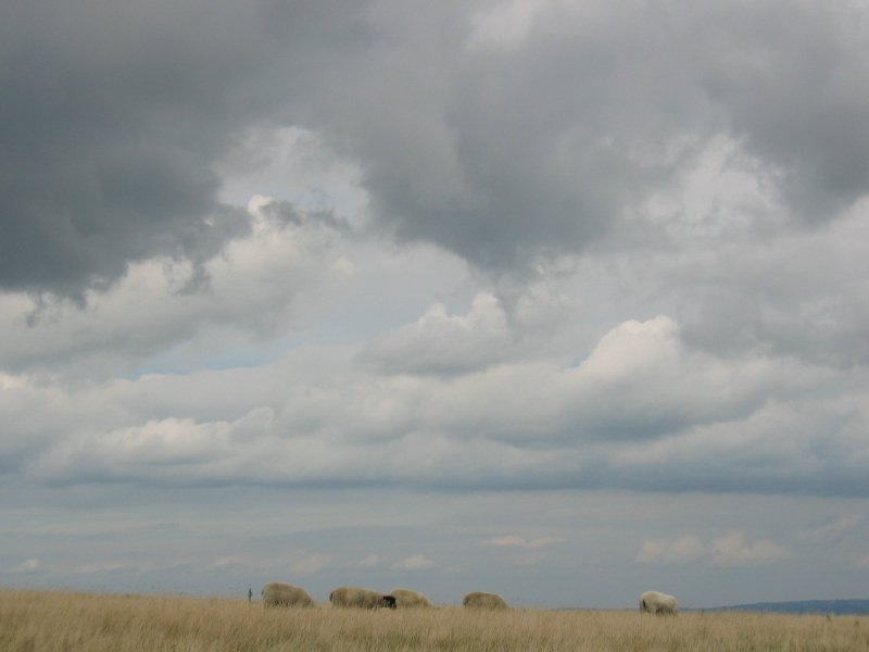 sheep and the sky
