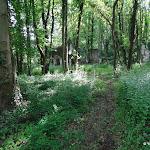 Bois de la Bergerette : vestiges du château de la Bergette