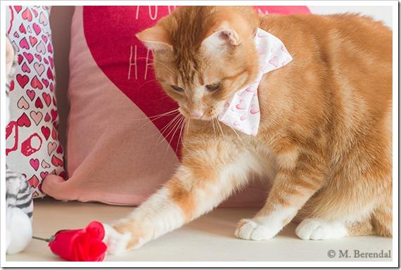 Teddy_Valentine_04