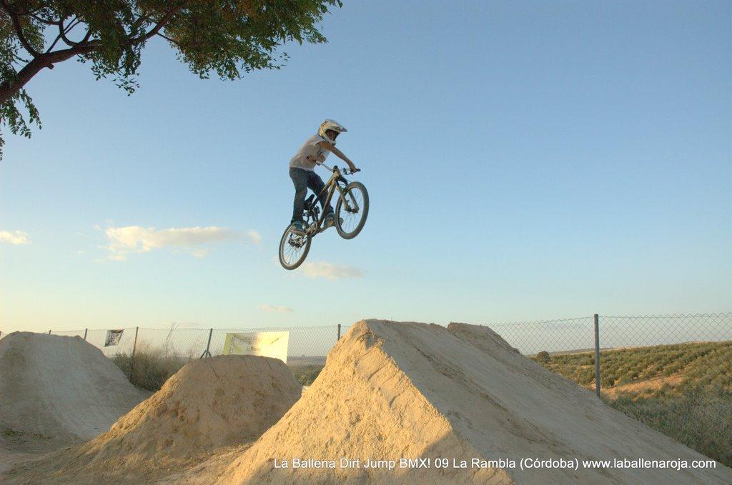 Ballena Dirt Jump BMX 2009 - BMX_09_0135.jpg