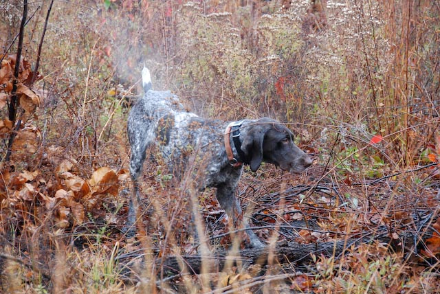 Thanksgiving 2010 - Hunt with Chris Zinkhan @ ACHP.  Pic from Geoff Lanceley.