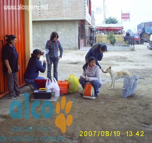 1era visita asistencia animales damnificados terremoto  Pisco 2007 (20)