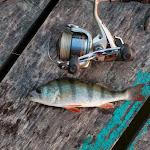 20140731_Fishing_Bochanytsia_002.jpg