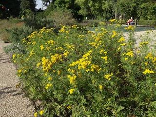 2016.08.05-044 plantes aromatiques